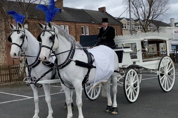 Andrew Anderson and Sons Funeral Directors-white horses